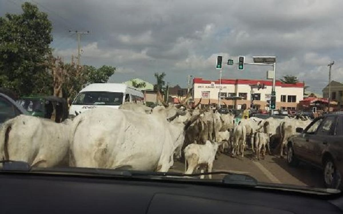 Amotekun Arrests Herdsmen, Cows For Violating Ondo's Herding Rules